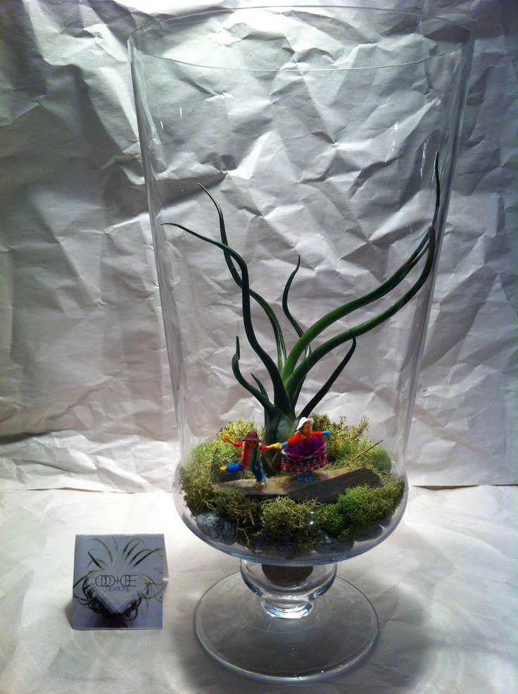 Medium Large Jar Terrarium 1 - $35