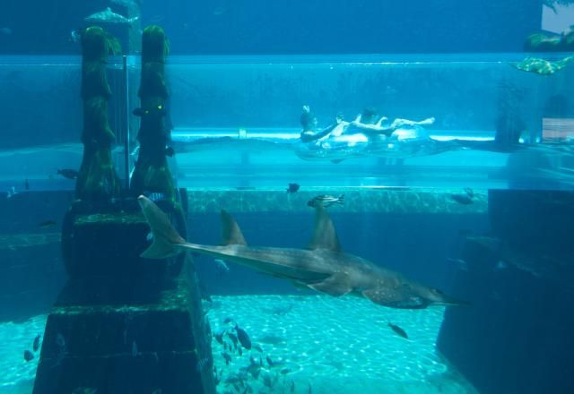 How to Visit the Atlantis Resort if You're Not a Guest: Atlantis Aquaventure, Nassau, Bahamas