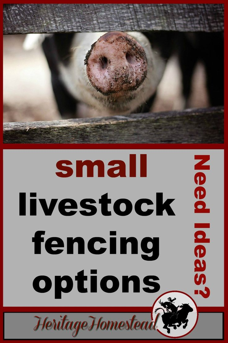 Fencing   Livestock   Fencing for small animals   Goats  Fencing for Goats: One of the four options may just be the perfect solution for you and your goats! Check out your options!