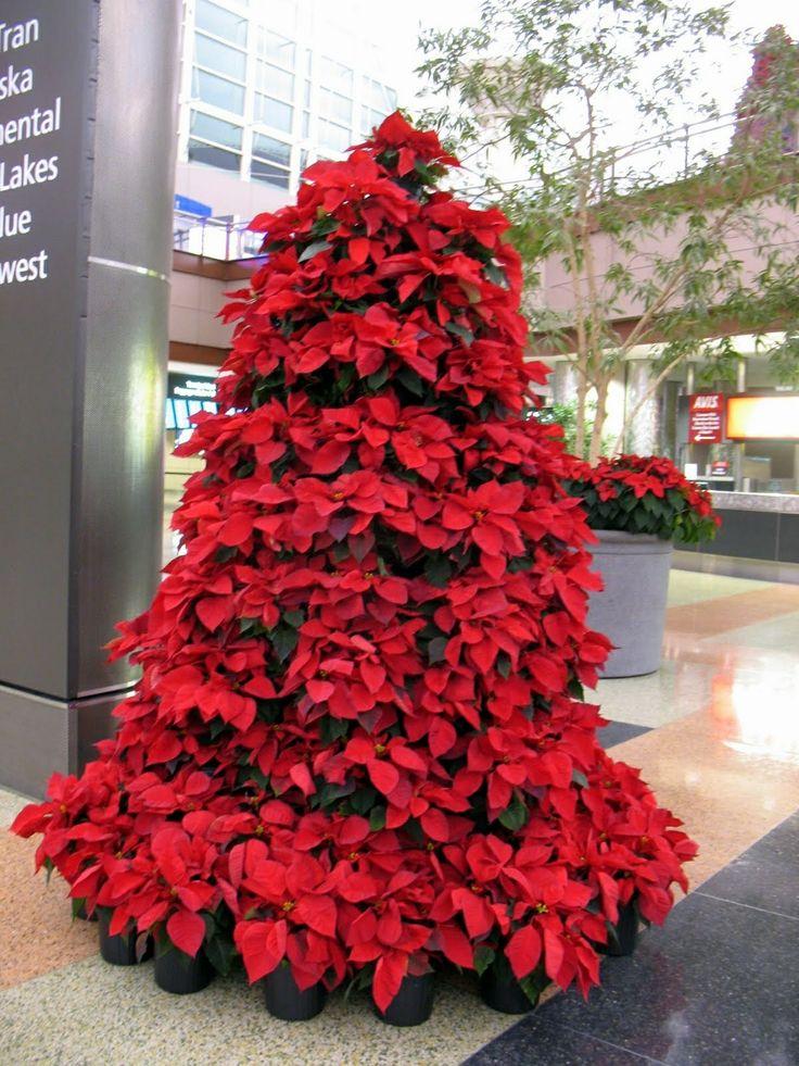Christmas Tree Made Of Poinsettia Plants Beautiful