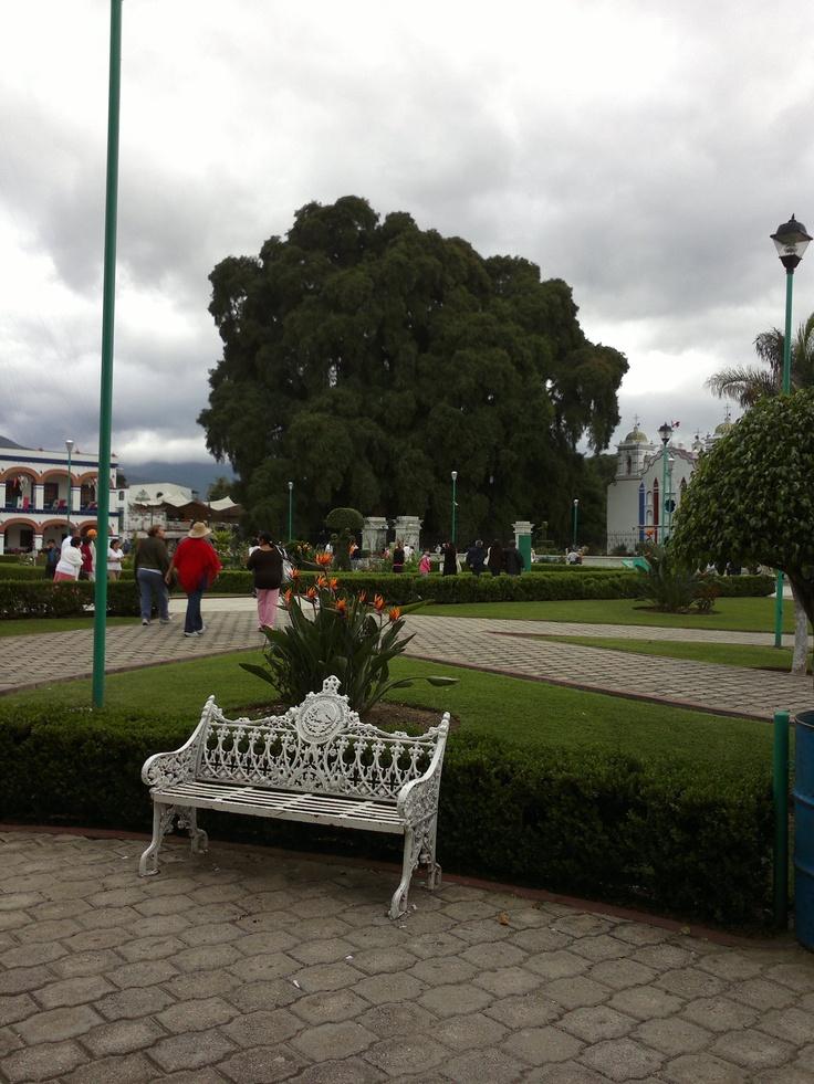 El Tule, Oaxaca - MX...really really old tree