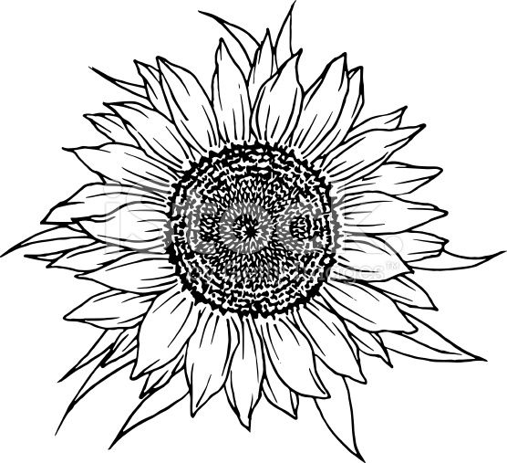 free black and white clip art sunflowers - photo #35