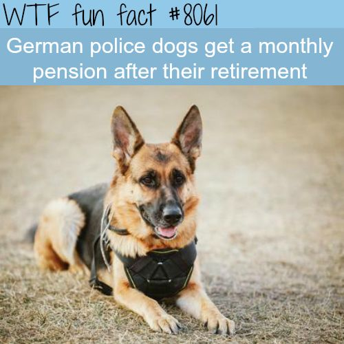 German police dogs get a pension after retirement - WTF fun fact