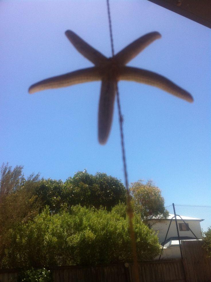 Starfish hanging