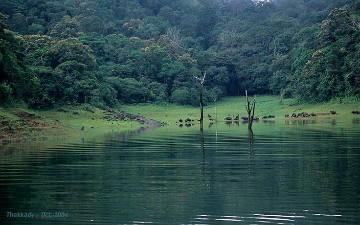 Thekkadi-the Beauty of Forests