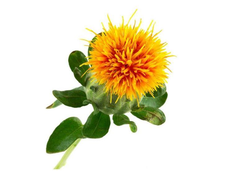 Size bu konumuzdaAspir yağının faydaları , nelere iyi gelir ? Nasıl Kullanılır ? Zararı var mıdır ? sorularının cevaplarını bir araya topladık . Aspir Yağı Nedir ? Nerede Yetişir ? Aspir yağı yararlarının yanı sıra zararları da olabilecek bir yağ türüdür. Aspir yağı latincesi Carthamus tinctorius olarak isimlendirilen aspir bitkisinin tohumlarından elde edilen bir yağ türüdür. Aspir yağının yararları arasında saç dökülmesini önlemesi, saç uzatması, kabızlığa iyi gelmesi gibi etkenler yer…