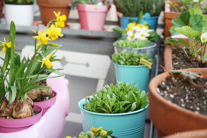 Beautiful spring flowers - balcony gardening