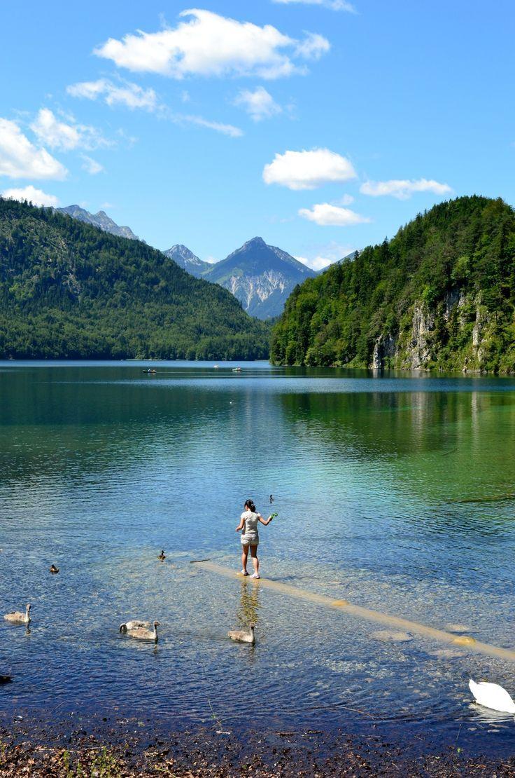Der Alpsee, #Bayern #Bavaria Der Alpsee ist ein 1,9 km langer See mit einem Umfang von 4,70 km in Bayern. Er gilt als einer der saubersten Seen Deutschlands. Heute wird er im Sommer sowohl von Einheimischen als auch von Touristen als Badesee in einer eigens dazu geschaffenen Badeanstalt (Alpseebad, am Südufer), im Winter vor allem zum Schlittschuhlaufen genutzt. Im Sommer ist auch ein Bootshaus geöffnet, an dem Boote zum Rudern auf dem See ausgeliehen werden können.