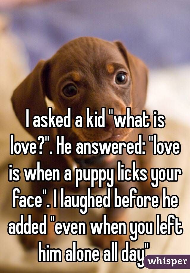 """I asked a kid ""what is love?"". He answered: ""love is when a puppy licks your face"". I laughed before he added ""even when you left him alone all day"""""