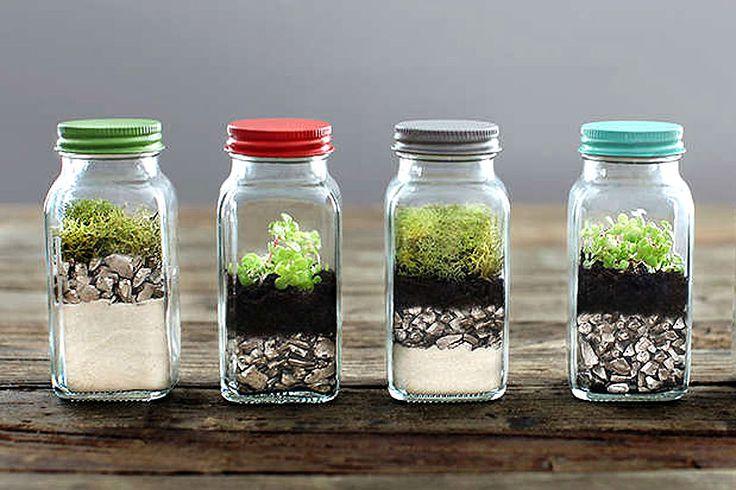 Het terrarium in kleine potjes met deksel in verschillende kleuren past binnen de botanischeinterieur trend. - More plants, terrarium and interior inspiration on http://www.stylingblog.nl