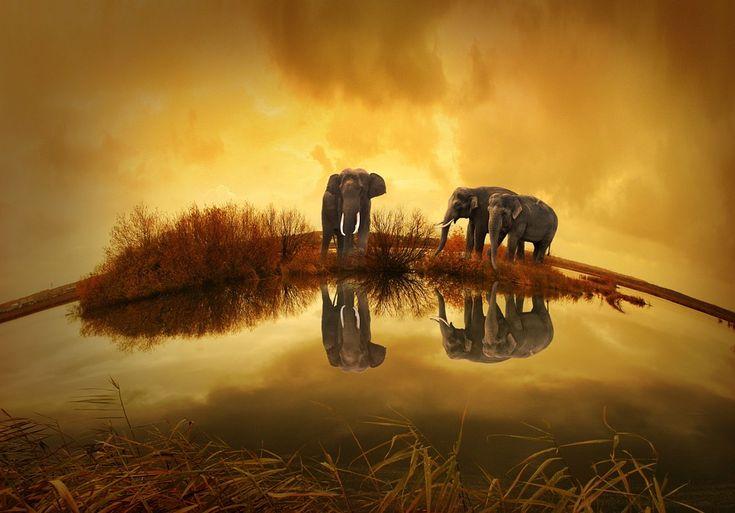 Tailândia, Elefante, Pôr Do Sol, Natureza, Animais