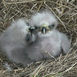 DC Eagle Cam • LIVE Bald Eagle Nest Cam, photo 4