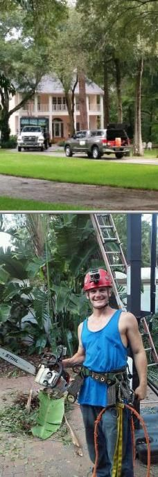 Hire Gulf Coast Trees if you are looking for a provider of local tree removal services. Let them provide all your tree needs. Check out their tree removal rates.