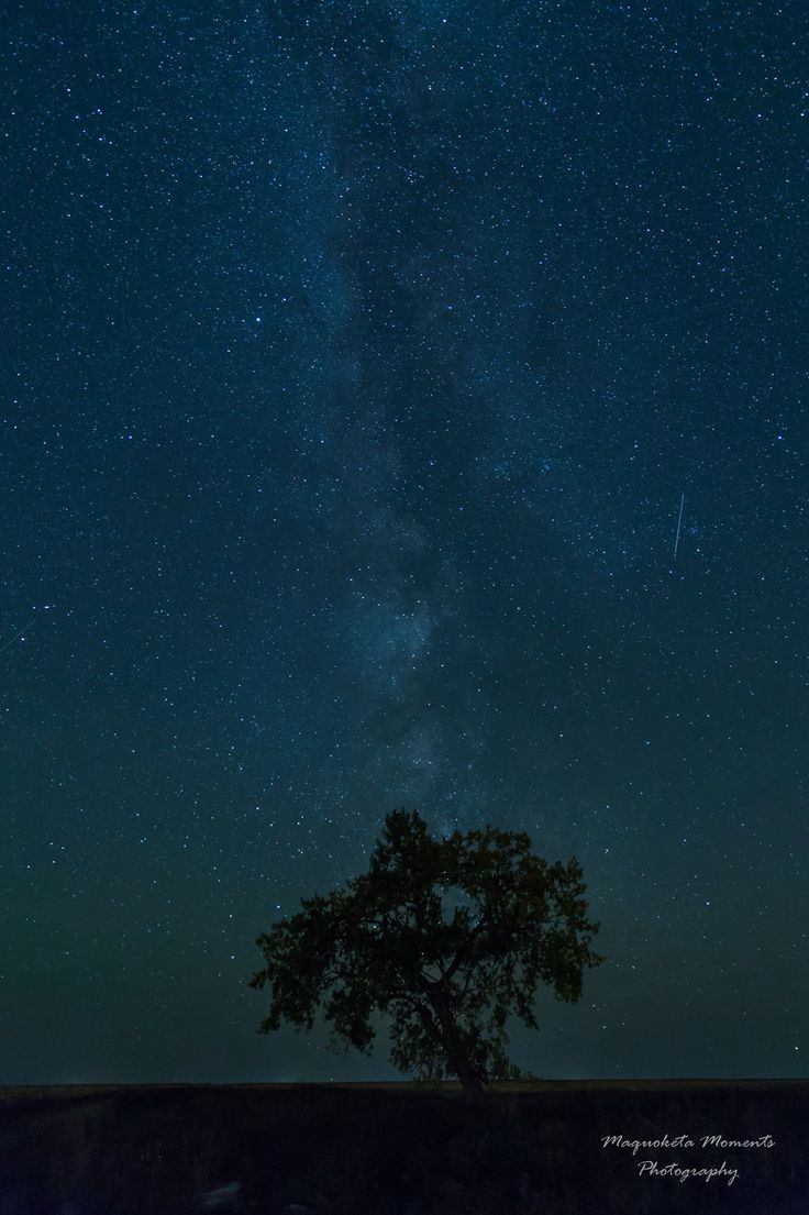 Tree under the Milky Way Photo Credit: Tammy Thomas