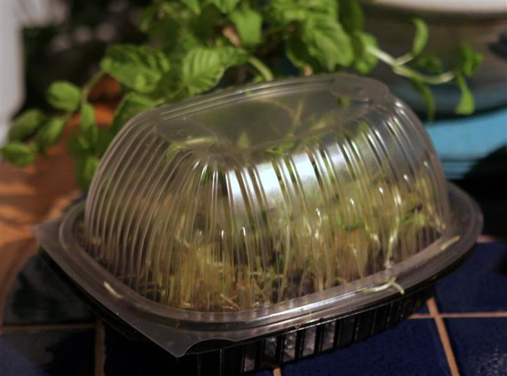 Chicken Seed Sprouter for Micro Greens