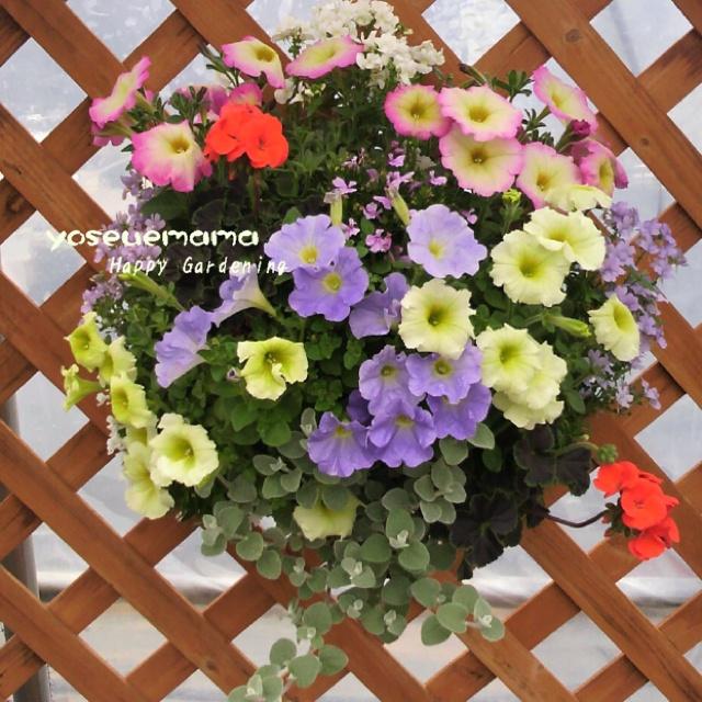 Petunia's hanging basket