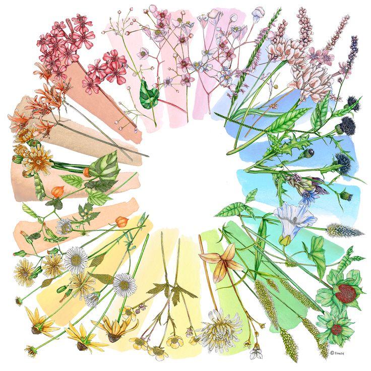 Spring Summer 2016 – COLLECTOR Flora Chroma 135x135 cm #Scarves