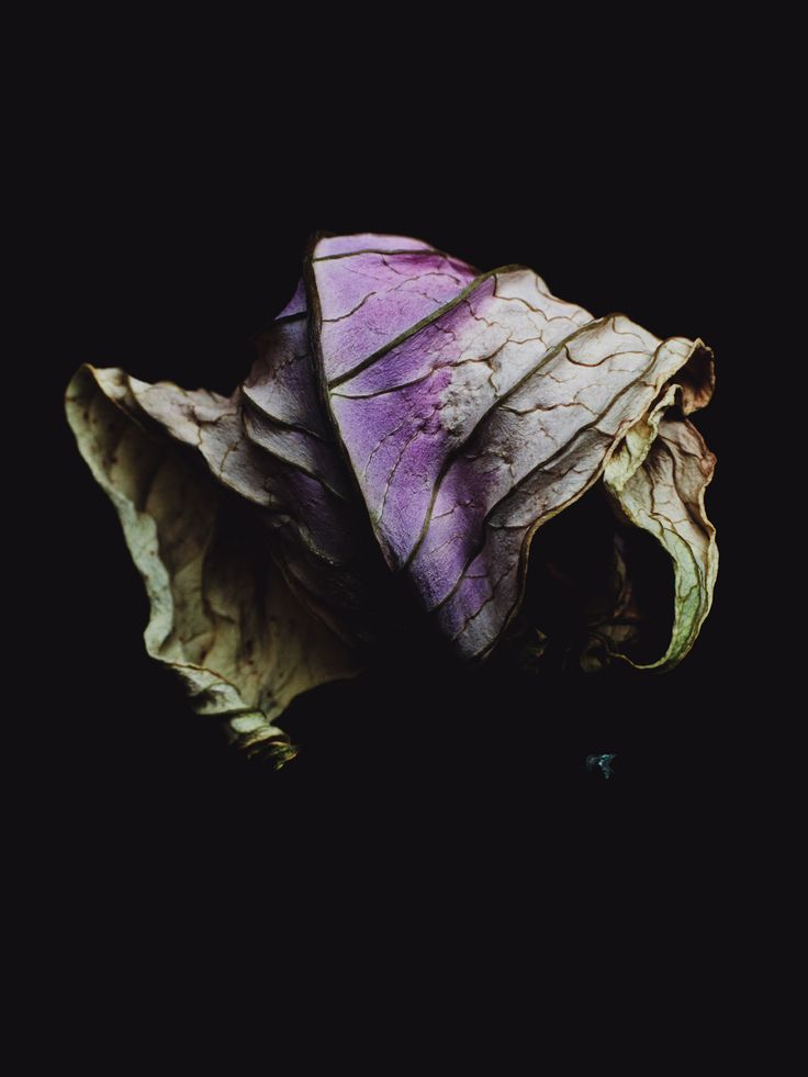decaying leaves   Billy kidd