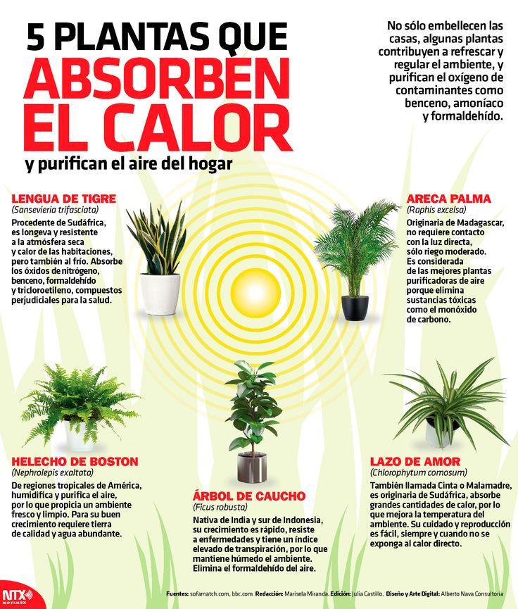 5 plantas que absorben el calor Eco Garden, Natural Garden, Green Garden, Garden Plants, Indoor Plants, Vegetable Garden, Organic Gardening, Gardening Tips, Plantas Indoor