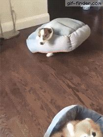 Dog subtly saying I screwed up and need help | Gif Finder – Find and Share funny animated gifs