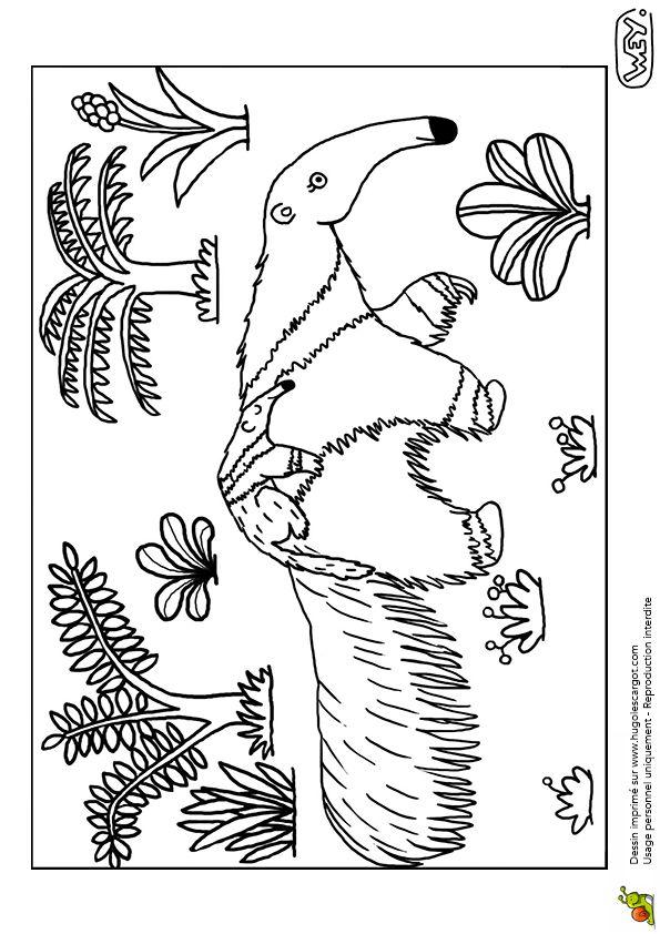 Coloriage Bebe Tapir.Coloriage D Une Maman Tamanoir Portant Son Bebe Sur Le Dos