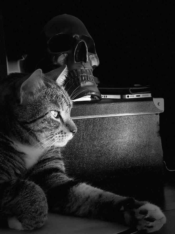 Puss designer cat 🖤🖤🖤