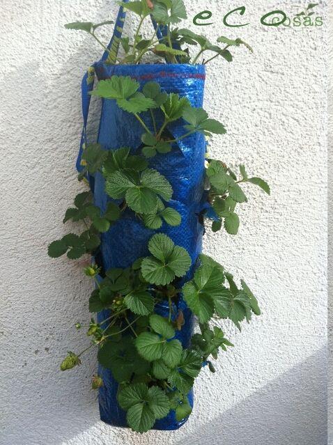 Como cultivar fresas en una bolsa de rafia