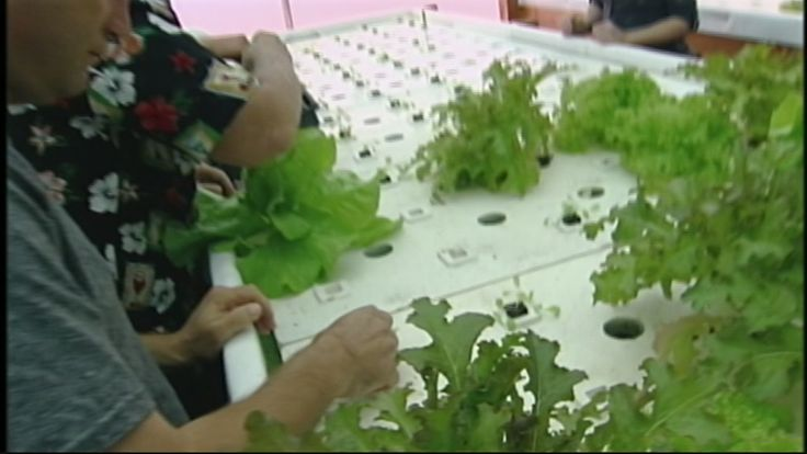 The Green Water Garden is a new social enterprise nonprofit in Santa Cruz that provides employment for adults with disabilities