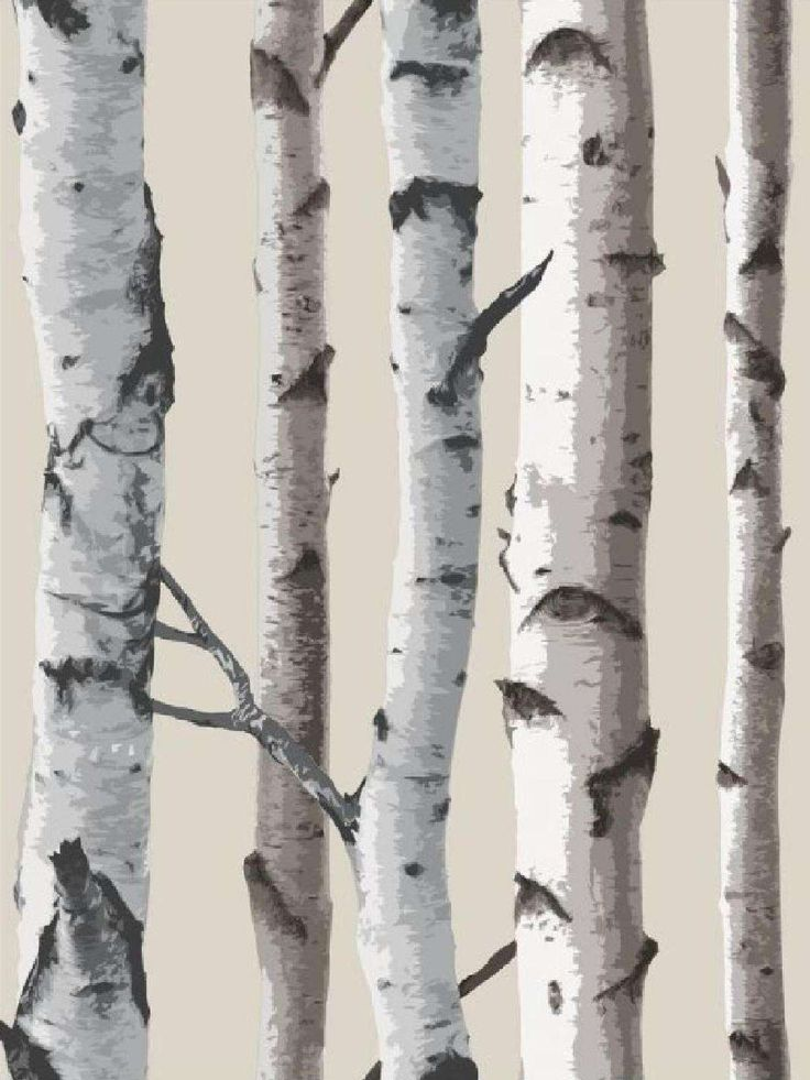 Silver Birch Wallpaper Interesting Another Alternative