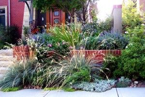 A flowering perennial and ornamental grass landscaping flows along the edge of a sidewalk in Denver