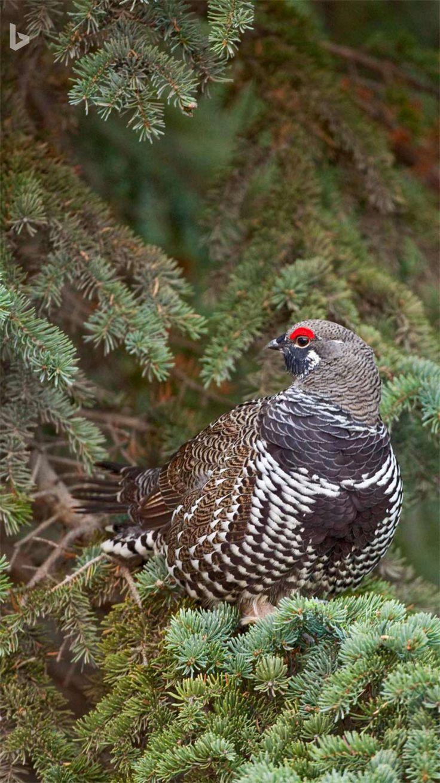 Pin by Vickie DeMallie on Wildlife, Animals, Birds