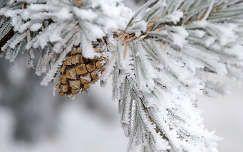 Tél háttérképek - 15. oldal - 3630 letölhető, nagyfelbontású fotó a témában.