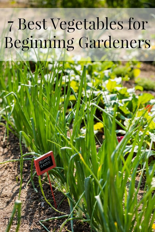 7 best vegetables for beginning gardeners