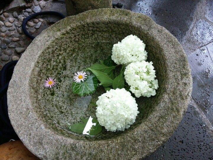 휴식, 교수단지 정원축제