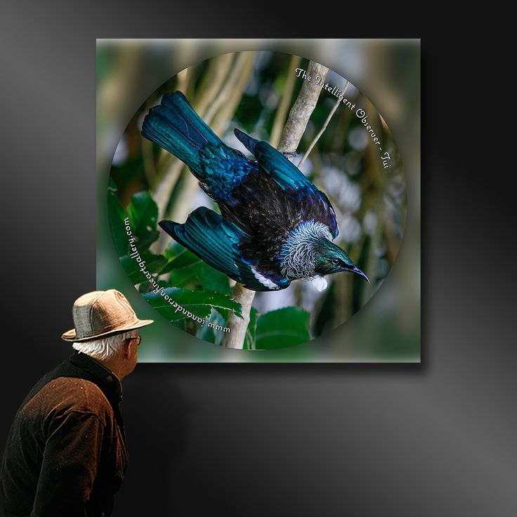 TUI - An intelligent observer - Ian Anderson Fine Art http://ianandersonfineart.com