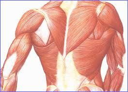Prendre du muscle - 5 conseils pour prendre du muscle #musculation #prendredumuscle #methodelafay www.methodeolivierlafay.com