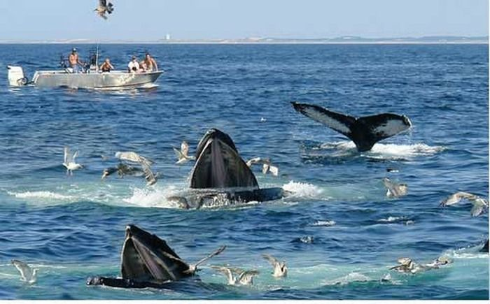 Blue huge whales in the deep sea water, Sri Lanka For whom water adventure is a…