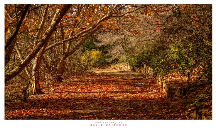 Golden Path by Dave Whiteman on 500px