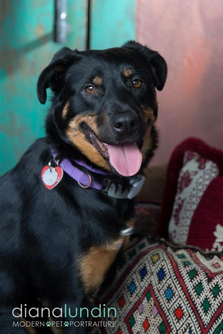 11 best Dog adoption images on Pinterest