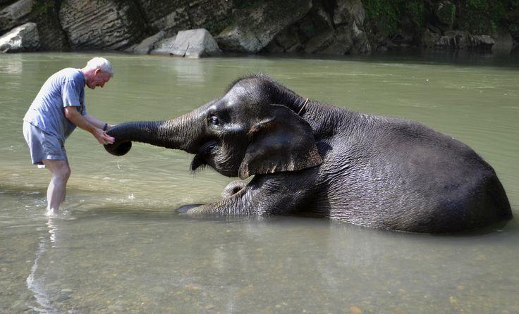 Washing Elephants in Tangkahan (Medan, Indonesia) - Review