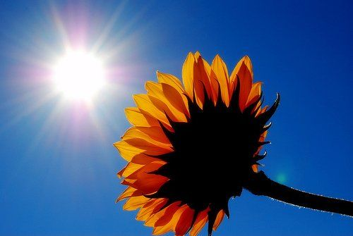 I think I am like a sunflower... I need warmth and SUNSHINE!!!