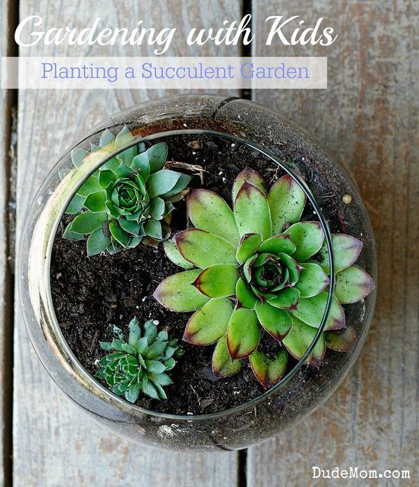 206 Best Images About Terrarios On Pinterest Terrarium Ideas Miniature And Orchid Terrarium