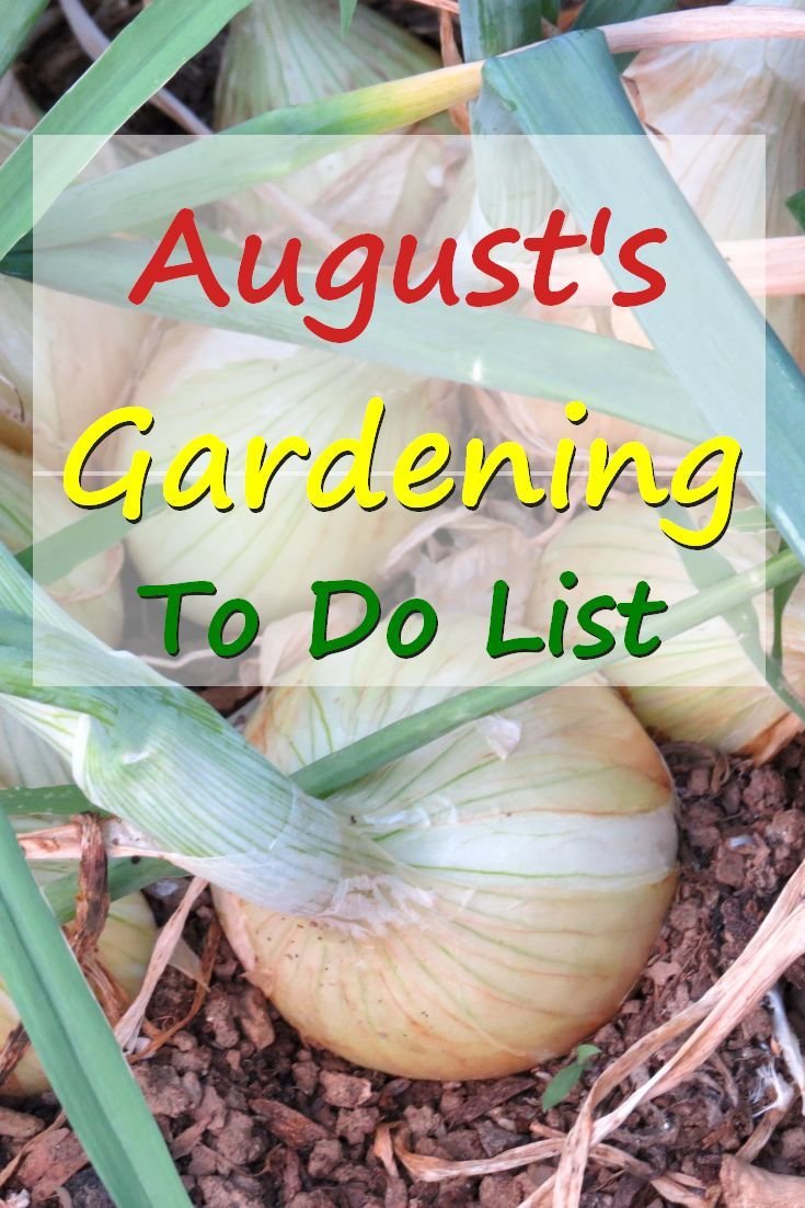 August's Gardening To Do list is long. Along with harvesting you'll be pruning, pinching, pulling, sowing seeds, transplanting a lots more. #gardening via @RobinFollette