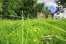 grass roots glamping holiday! http://www.qualityunearthed.co.uk/shepherds-hut-glamping-dorset.php