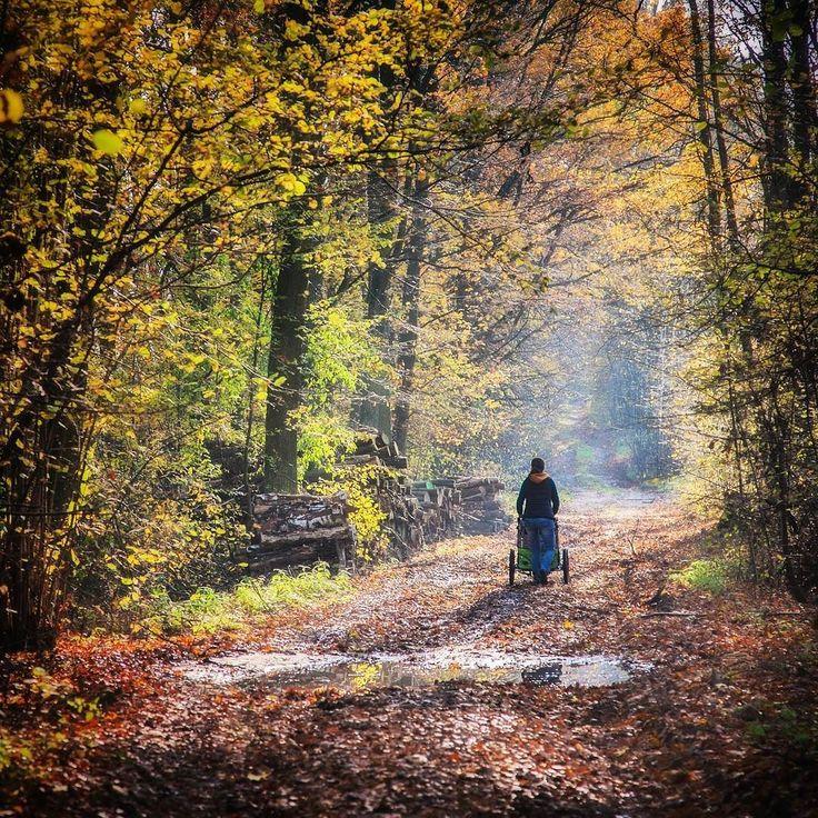 """Nie no dzisiaj po prostu trzeba było się ruszyć. Tym razem #mikrowyprawa nad Zalewem Koronowskim zakończona obiadem I kawą w najlepszej restauracji pod słońcem - """"Na trawie"""" :-) #jesień #fall #november #listopad #forest #qeridoo #odmalegonacalego #las #forest #autumn #walk #spacer #mikrowyprawy #lasypanstwowe"""