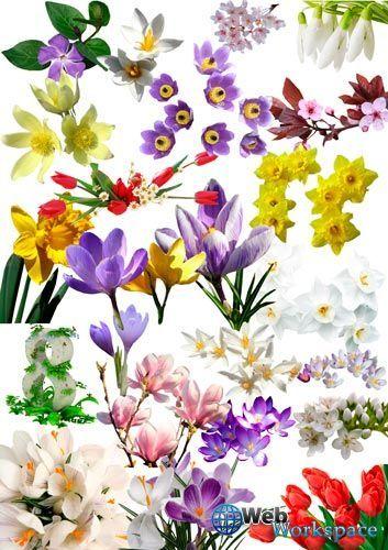 тропические цветы - Поиск в Google