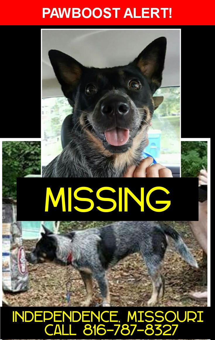 Please spread the word! Barley was last seen in Independence, MO 64050.  Description: Barley is a 2 year old Blue Heeler Female.   Her ear stand erect, she has a black mask around both eyes,  a black spot on her left side and her left hind hip/leg and tail.    Nearest Address: 1630 E Mechanic Ave