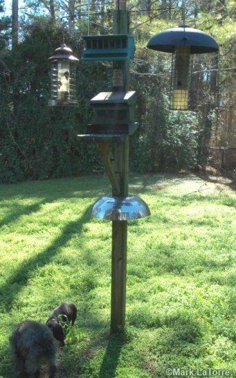 Easy, inexpensive and effective squirrel baffles for bird feeders and houses that you make