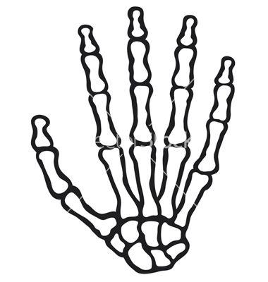 Phalanges Bone Use