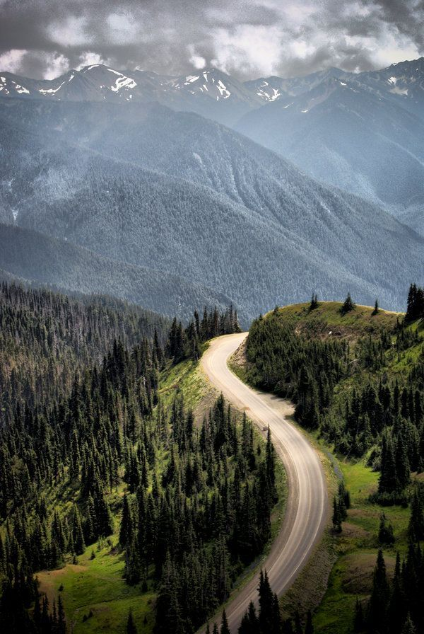 Hurricane Ridge, in Olympic National Park, Washington State